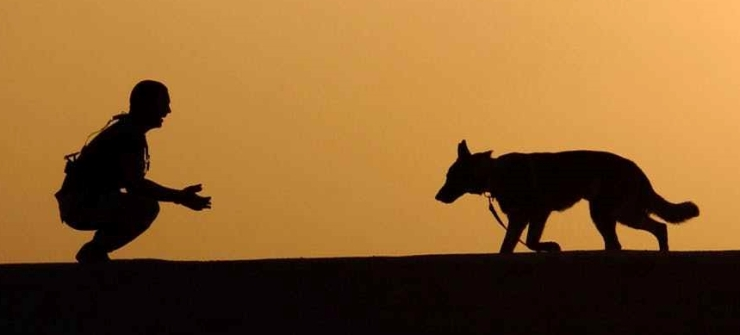 dog-trainer-silhouettes-sunset-38284.jpeg